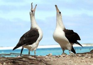 albatross24